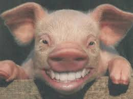 pig with teeth